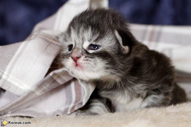 chaton essaye de teter Trop drôle un chaton essaye de téter sa maman chien d'adoption, tandis que cette dernière lui fait la toilette ce n'est plus une toilette, c'est une douche.